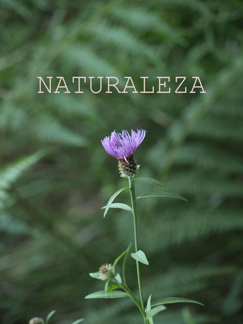 Foto de la flor de la baradana con título: naturaleza