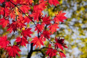 Foto de hojas otoño