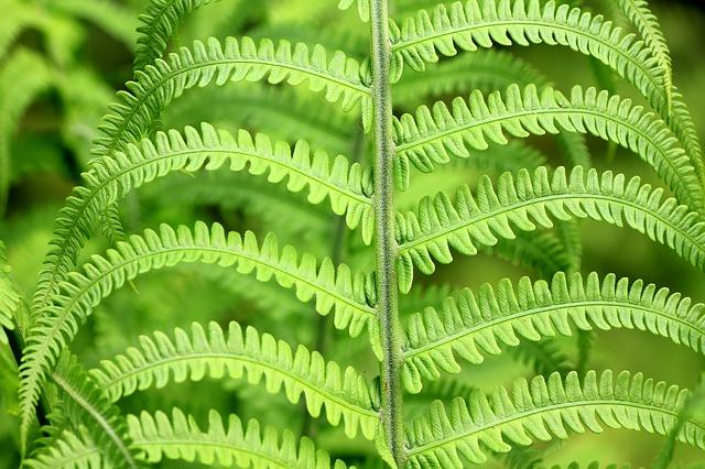 Foto de helechos verdes